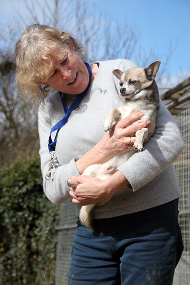 iden-boarding-kennels-bernardine-with-chihuahua