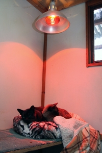cats-under-heat-lamp