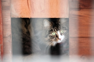 cattery-east-sussex